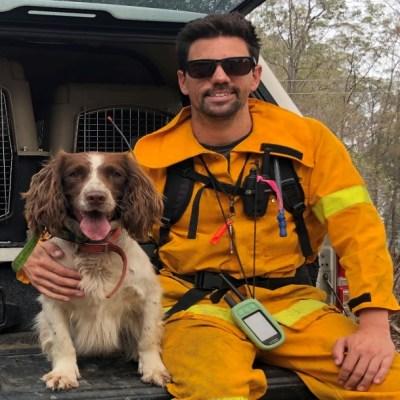 Conoce a 'Taylor', la perrita que olfatea y rescata koalas de los incendios de Australia