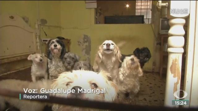 FOTO: vecinos denuncian casa con mas de 40 perros abandonados en cdmx