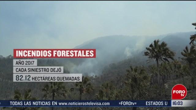 FOTO: 2019 uno de los anos mas devastadores por incendios forestales