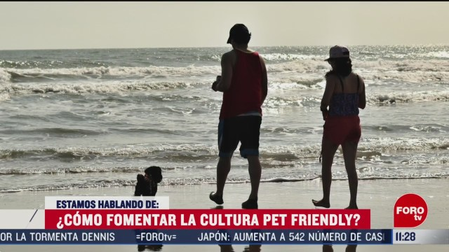 ¿Cómo fomentar la cultura Pet Friendly?