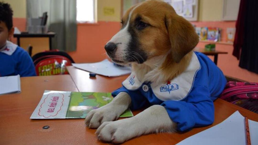 Perrito va a la escuela y toma clases con uniforme