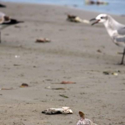 Advierten sobre 'marea roja' que intoxica a peces en Veracruz