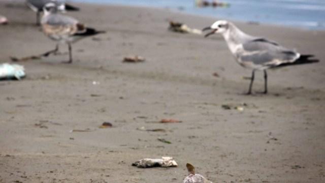 Foto: Advierten sobre 'marea roja' en Veracruz