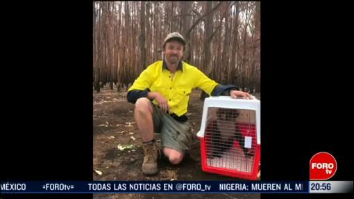 Foto: Afectaciones Ambientales Incendios Australia Rescate Animales 20 Febrero 2020
