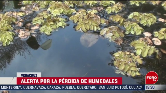FOTO: alertan sobre la perdida de humedales en veracruz