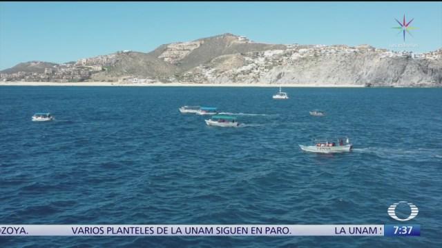 ambientalistas denuncian que avistamiento de ballenas es un caos en los cabos