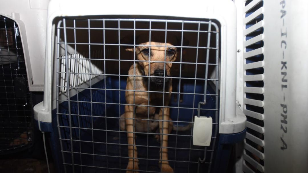 Foto: Proponen Brigada de Vigilancia Animal rescate perritos maltratados, 09 de enero de 2020, (CRISTIOAN HERNANDEZ /CUARTOSCURO.COM)