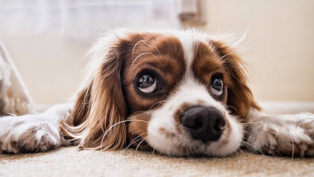 UNAM invita a ciclo de cine dedicado a los perros