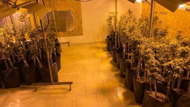 """Foto: En el lugar se localizaron cinco kilos 247 gramos de marihuana y 321 plantas con un peso de 28 kilos 378 gramos, además, se realizó la detención de Ricardo """"N"""" y Tabita """"N"""""""