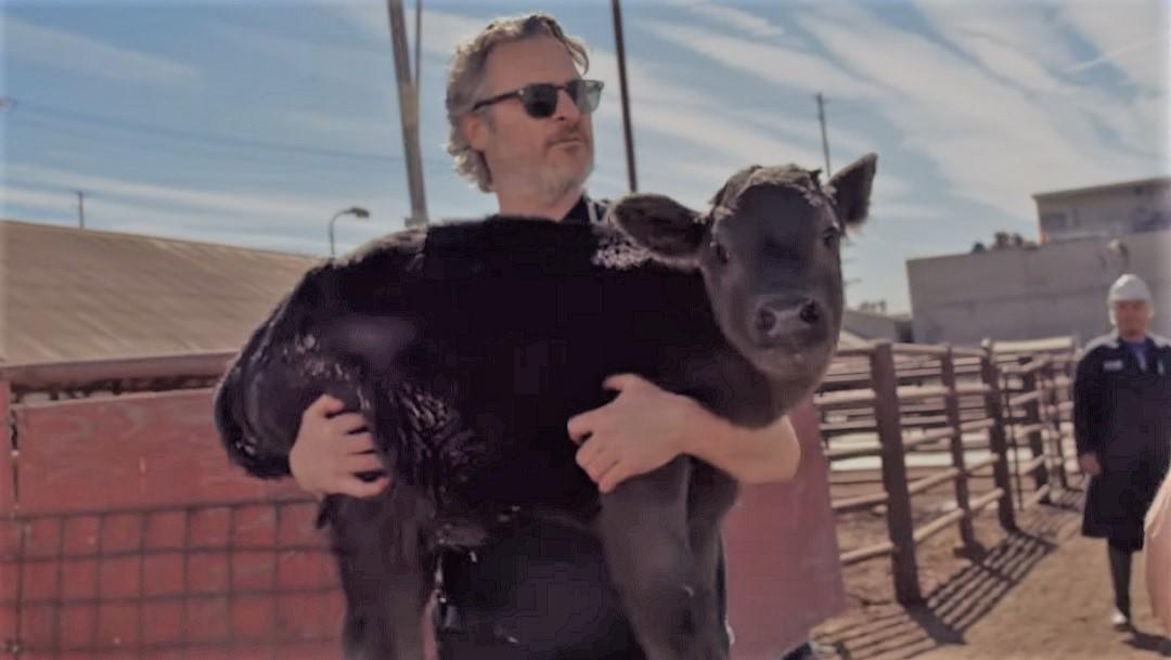 Joaquin Phoenix rescata a una vaca y su cría en matadero