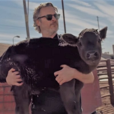 Video: Joaquin Phoenix rescata a una mamá vaca y su cría en un matadero de Los Ángeles