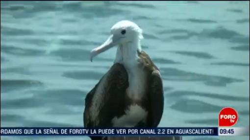 FOTO: 16 Febrero 2020, miles de aves migratorias son un espectaculo en yucatan