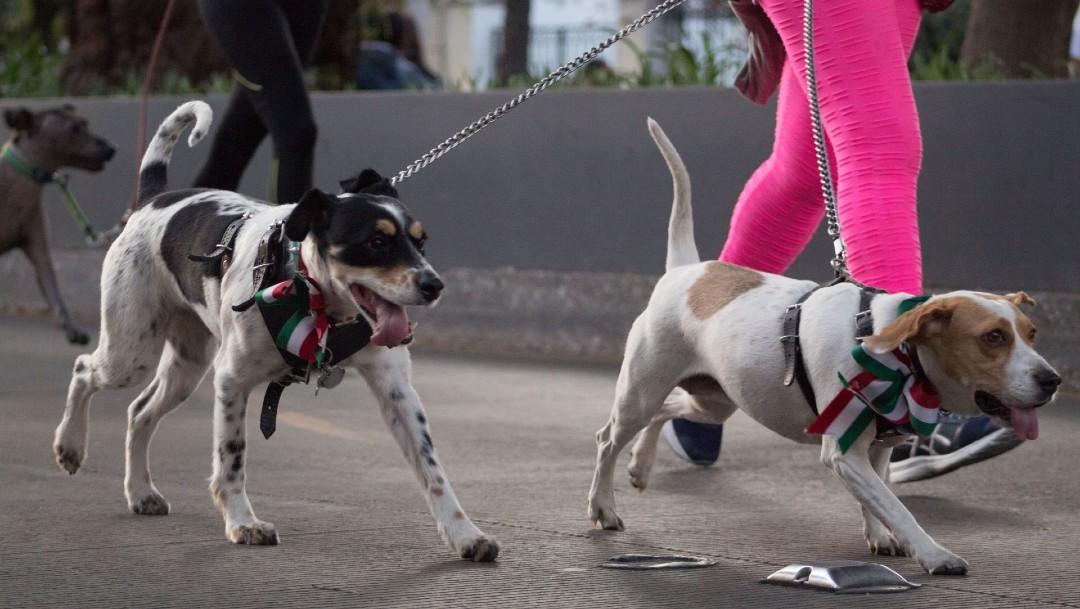 Foto: Multarán en Ecatepec, Edomex, a quien pasee a su perro sin correa