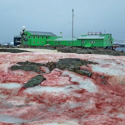 Fotos: Alga provoca 'nieve de frambuesa' en la Antártida
