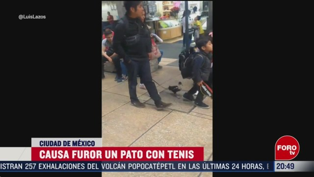 Foto: Video Pato Con Tenis Sensación Metro Cdmx Hoy 19 Febrero 2020