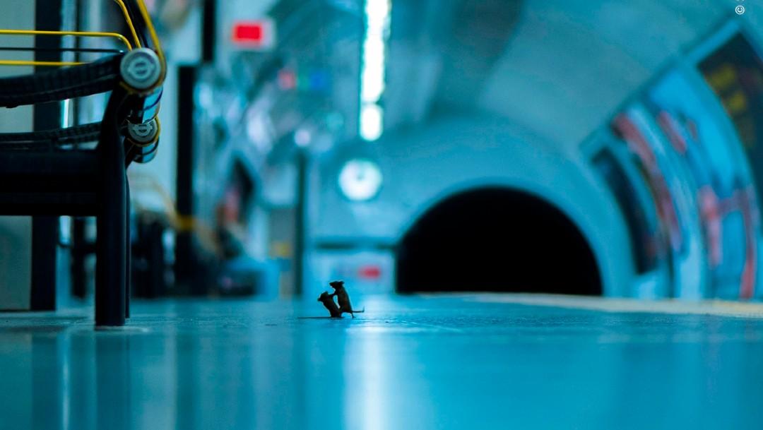 Resultado de imagen de Pelea de ratones
