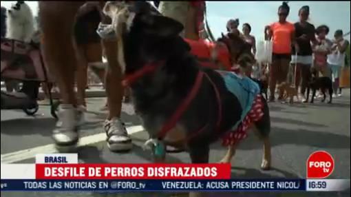 FOTO: 16 Febrero 2020, perros disfrazados participan en desfile en copacabana rio de janeiro