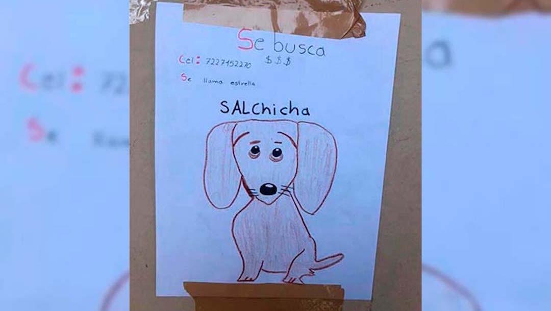 perro-perdido-raza-salchicha-dibujos-Toluca