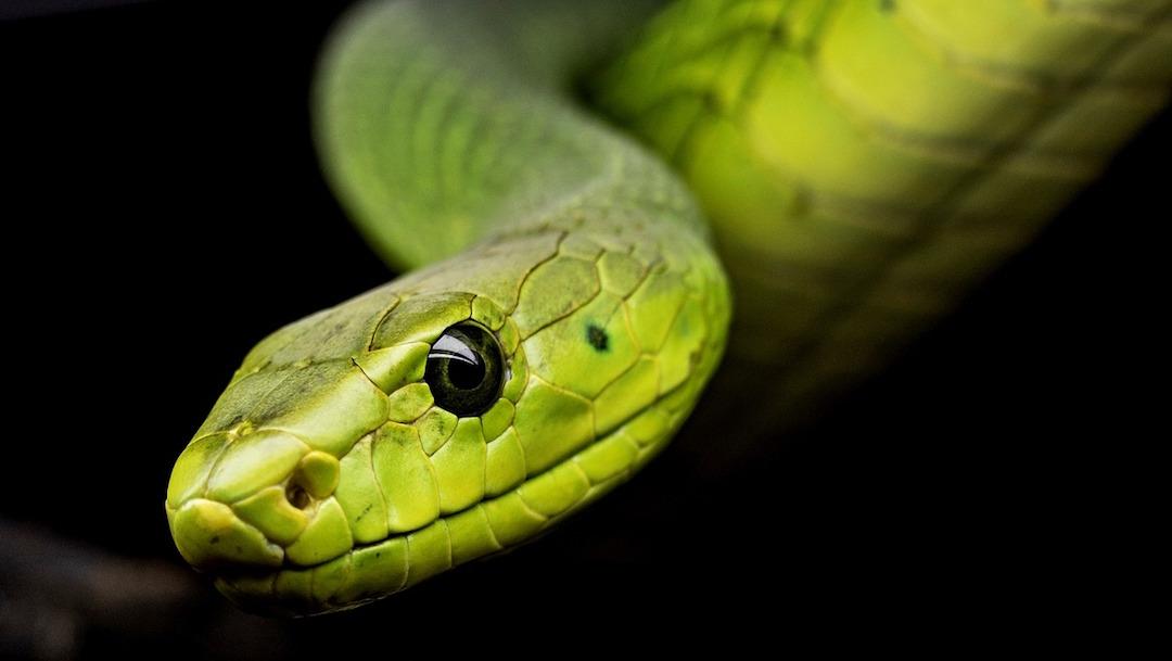 Cierran parque por 'temporada de celo' de serpientes acuáticas