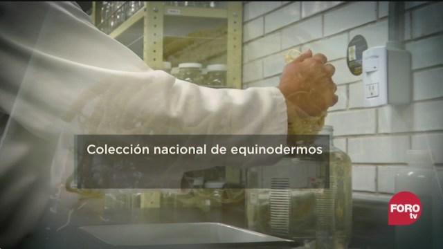 FOTO: 29 marzo 2020, conoce la coleccion nacional de equinodermos de la unam