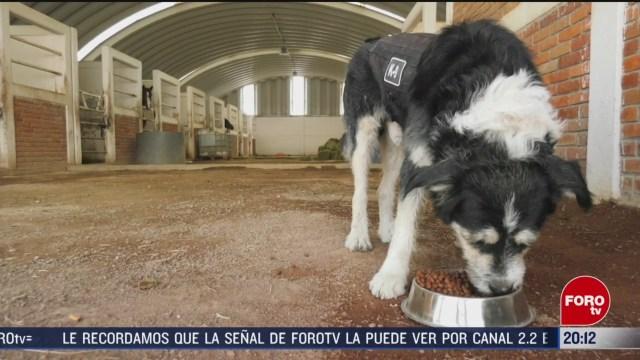 FOTO: 15 marzo 2020, ecatepec tiene un nuevo policia canino