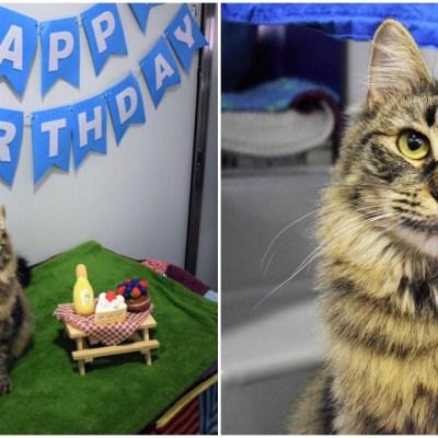 Hacen fiesta para gatita por cumplir 100 días en el refugio, pero nadie la adoptó