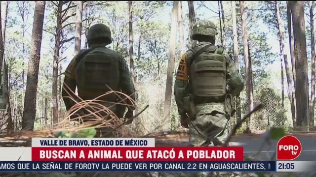 Foto: Muere Hombre Ataque Animal Salvaje Valle De Bravo Felino 4 Marzo 2020