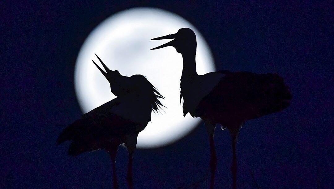 Fotos: Así se vio la superluna rosa de abril