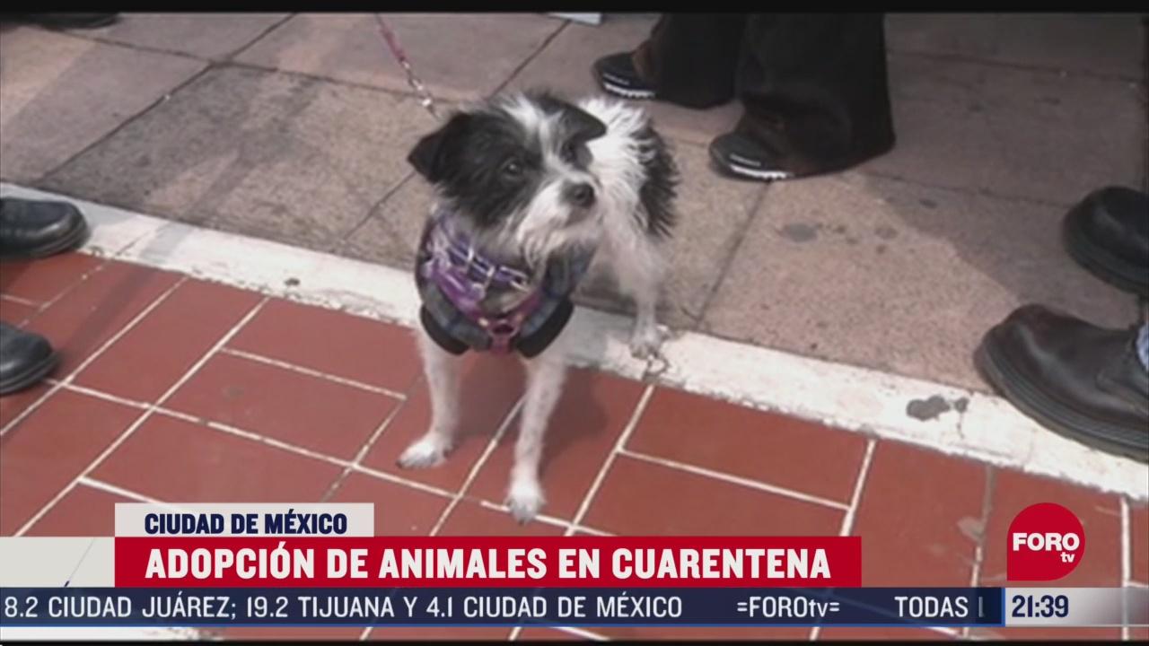 Foto: como adoptar perros y gatos en cuarentena por coronavirus 17 Abril 2020