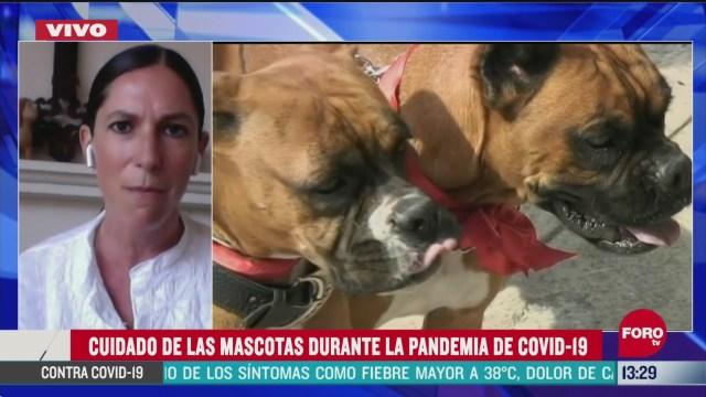 FOTO: como cuidar a nuestras mascotas durante cuarentena por coronavirus