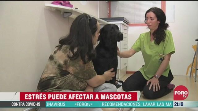 Foto: Cómo El Estrés Puede Afectar A Las Mascotas 2 Abril 2020
