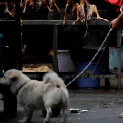 China elimina a perros y gatos de lista de animales comestibles tras brote de coronavirus