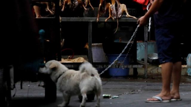 Coronavirus: Perros ya no serán animales comestible en China