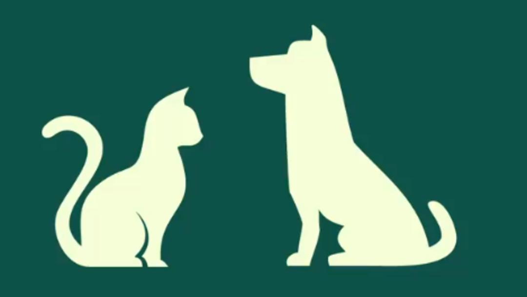 """FOTO: """"No los abandones"""", Sheinbaum hace un llamado a dueños de mascotas por crisis del coronavirus, el 12 de abril de 2020"""