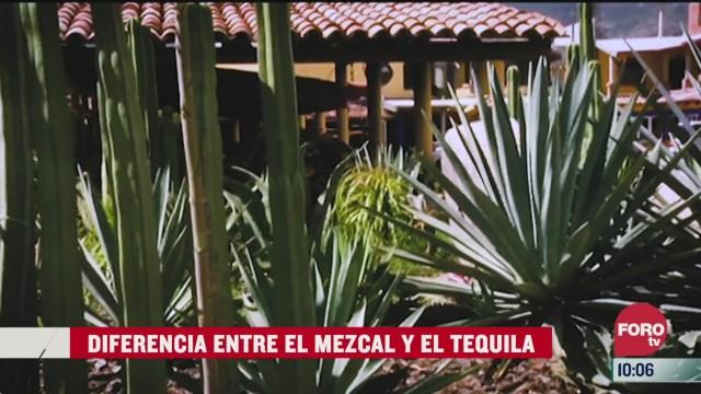 diferencias entre mezcal y tequila