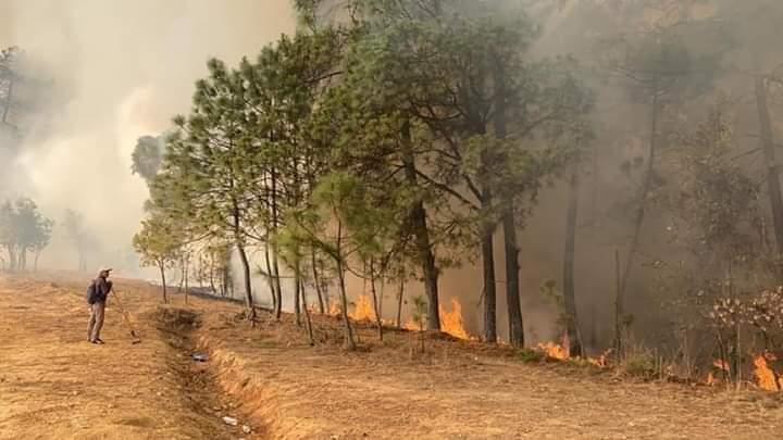 Foto: Declaran emergencia por incendios en cinco municipios de Oaxaca, 15 de abril de 2020, (@CEPCO_GobOax)