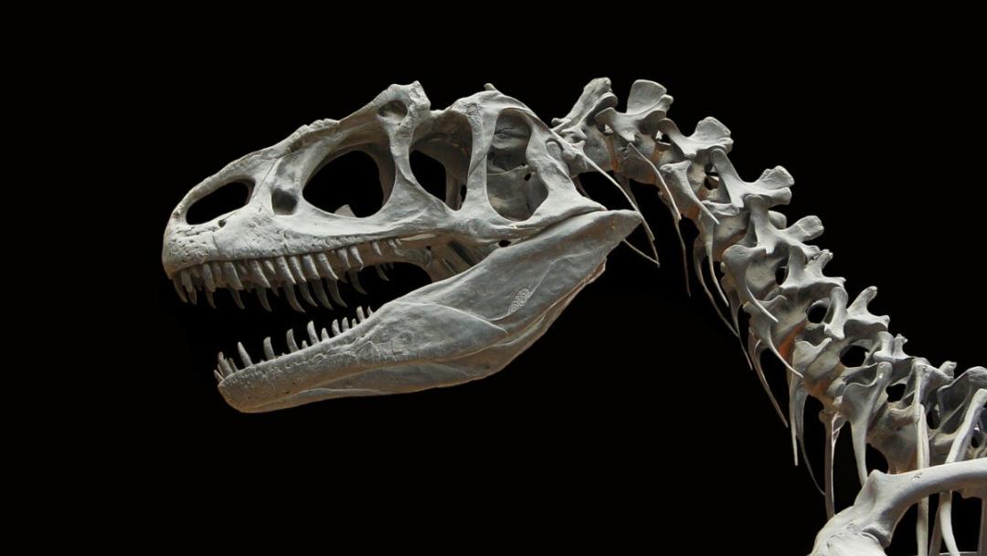 ¿Cómo han cambiado los dinosaurios con e l paso del tiempo?