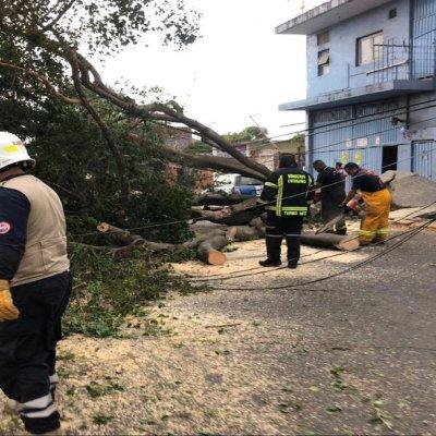 Fuertes rachas de vientos derriban árboles en Cuernavaca, Morelos
