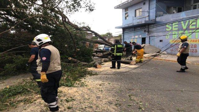 Fuertes rachas de vientos derriban árboles en Cuernavaca