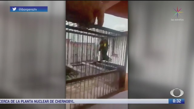 hombre en aislamiento pone en libertad a sus aves en espana