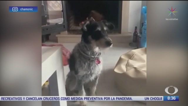 mascota tiene claro que no puede salir de paseo por coronavirus