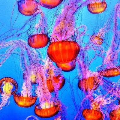 Video: Miles de medusas rosadas invaden playa filipina desierta por la cuarentena