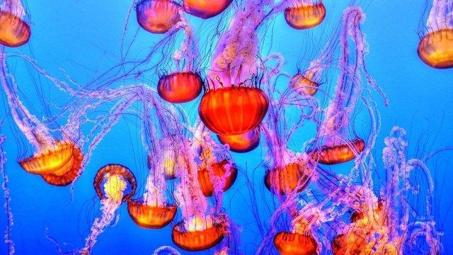 Foto Medusas Rosadas Playa 3 Abril 2020