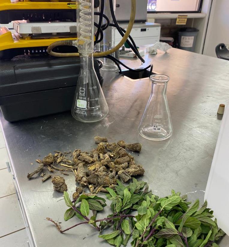 Gel-Antibacterial-Coronavirus-Las-Plantas-Medicinales-Estudiantes-Tarahumaras-Sierra-Tarahumara-Fabricacion-Elaboración-Coronavirus-Chihuahua, Ciudad de México, 25 de abril 2020