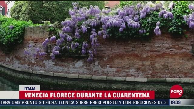 Foto: Coronavirus Italia Venecia Florece Durante Cuarentena Covid-19 17 Abril 2020