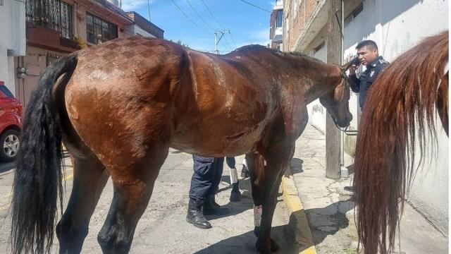 Muere niño tras ser arrastrado por un caballo