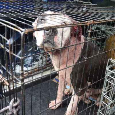 Muere abuelita tras ataque de perro pitbull en Jalisco