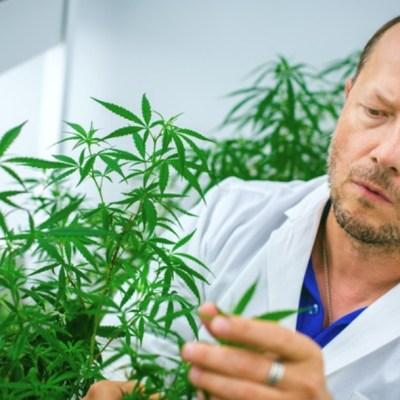 ¿Puede el cannabis bloquear los efectos del coronavirus? Un estudio apunta que sí