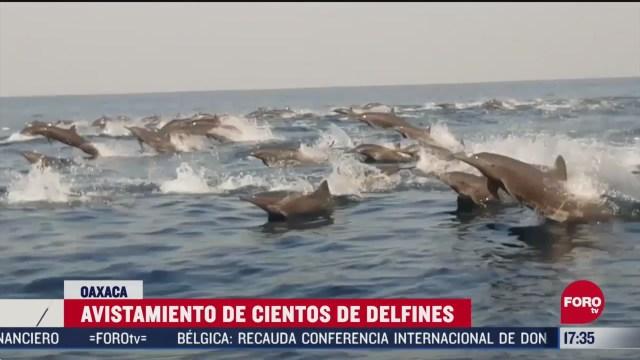 FOTO: captan a cientos de delfines en costas de oaxaca