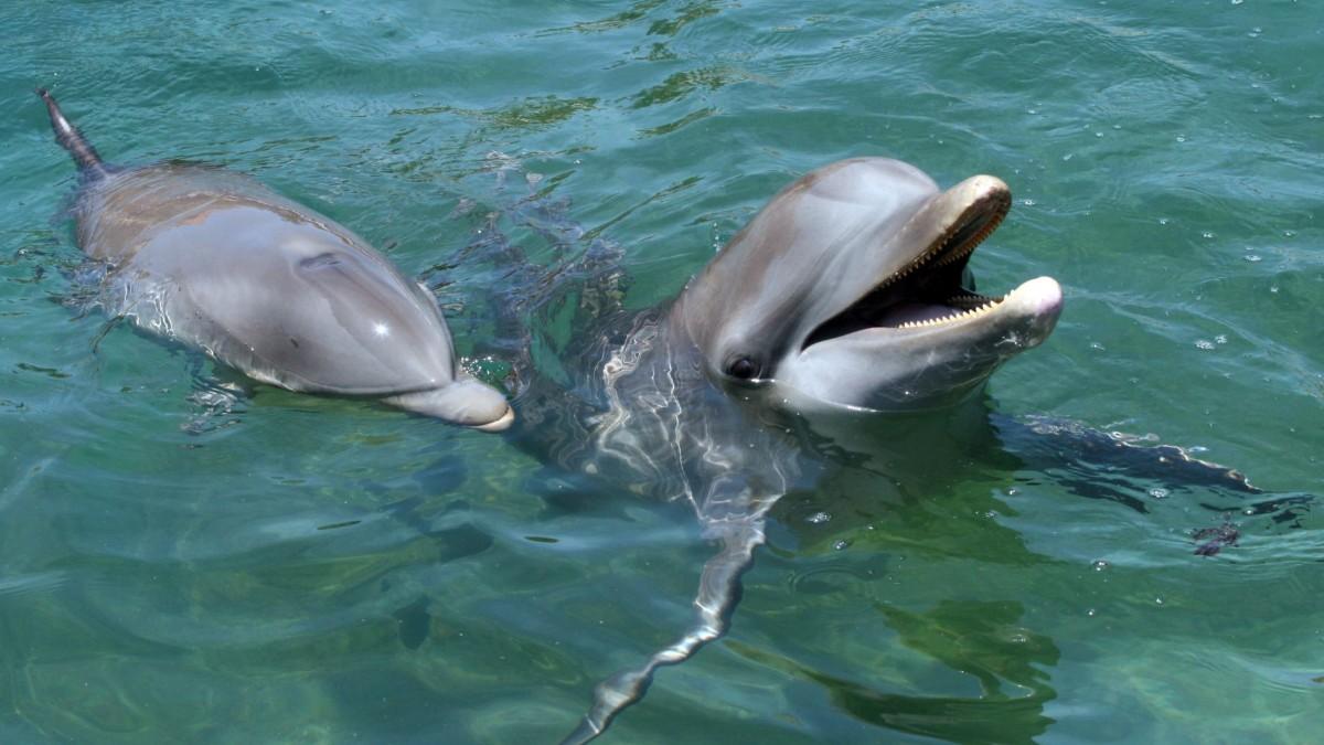 Captan-estampida-de-delfines-nadando-juntos